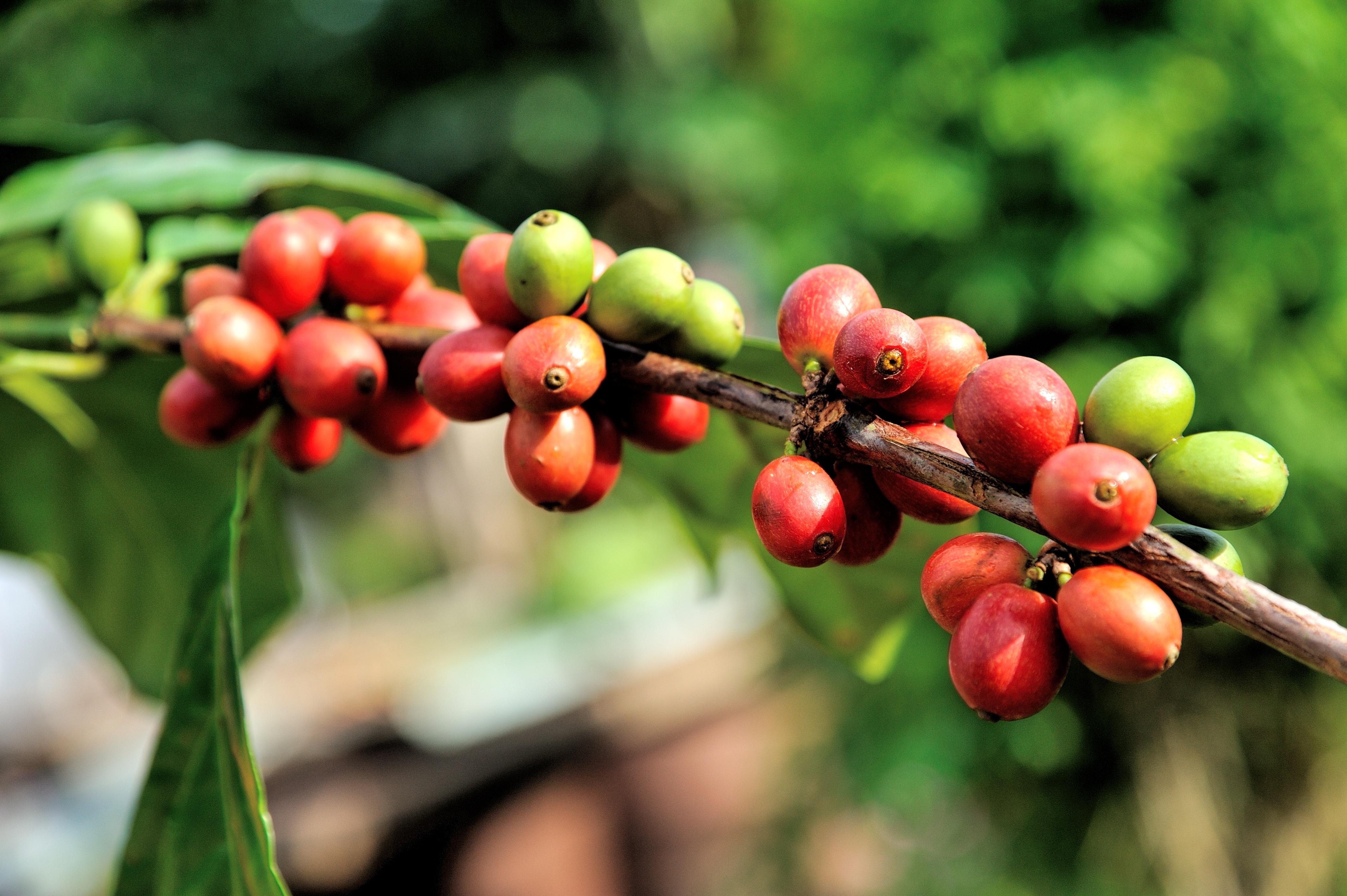 Best arabica coffee beans online