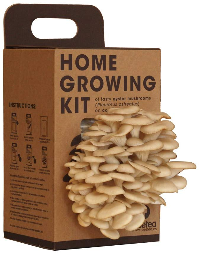 fertilise mushrooms with used coffee grounds